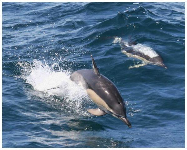Excursión Royal Delfín