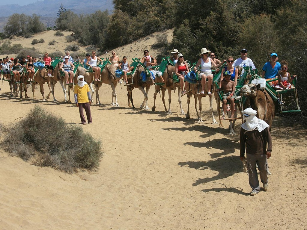 camellos dunas