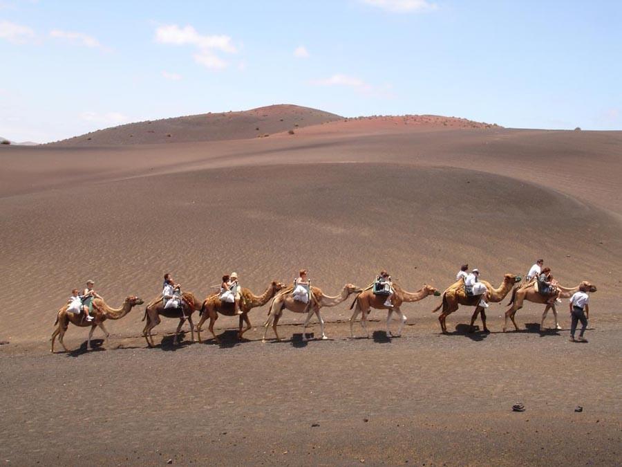 Paseo a camello en Timanfaya