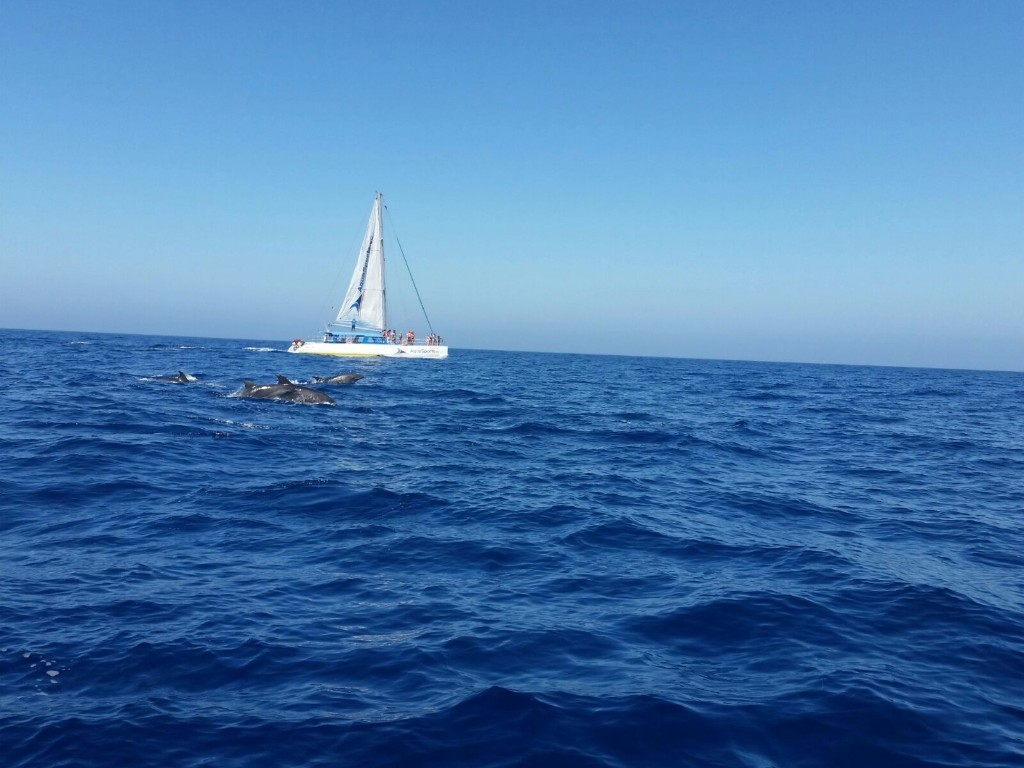 Catamaran tour Magic Gran Canaria