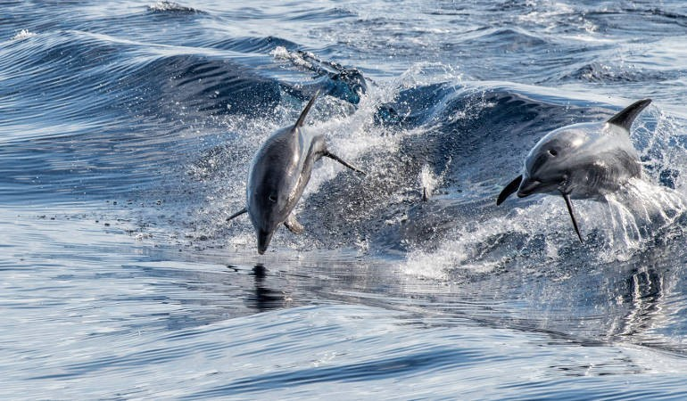 See dolphins in their natural environment
