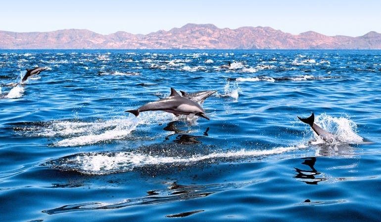 Dolphin watching in Gran Canaria
