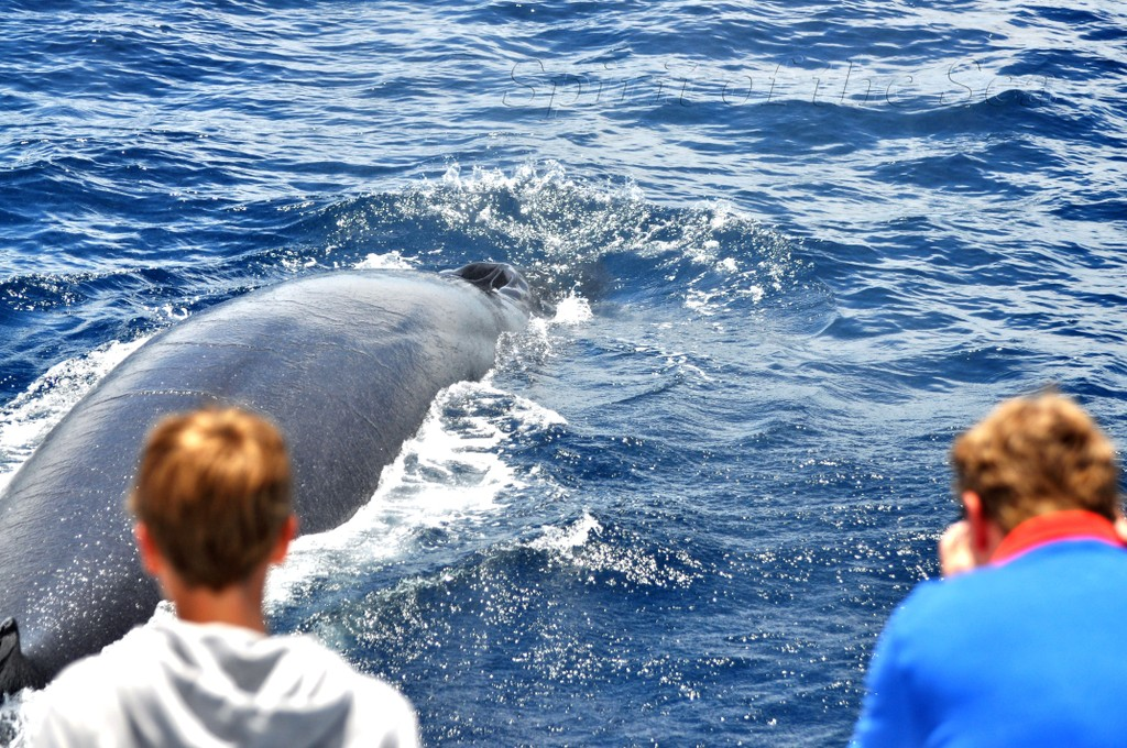 Whalewatching Gran Canaria