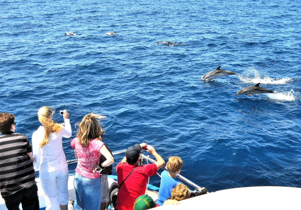 Dolphin watch experience in Gran Canaria