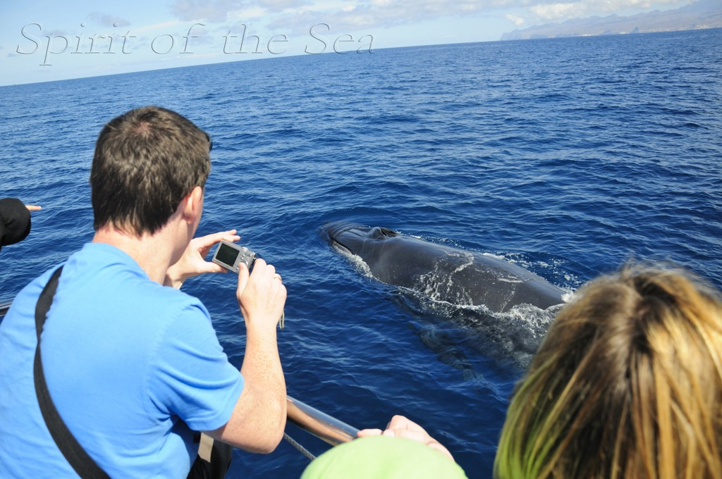 Whales are also seen