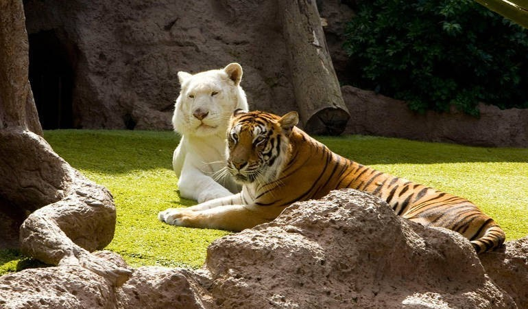 Loro Parque, perfect for families