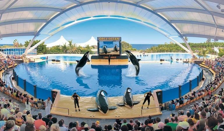 Beautiful killer whales