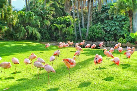 Loro Parque in Tenerife