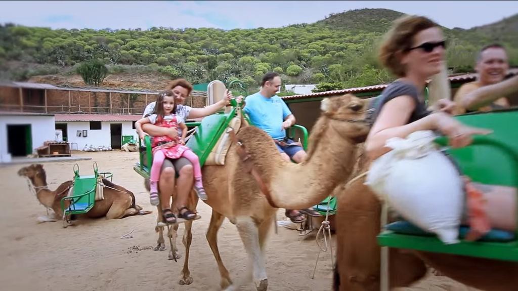 Paseo a camello en Gran Canaria