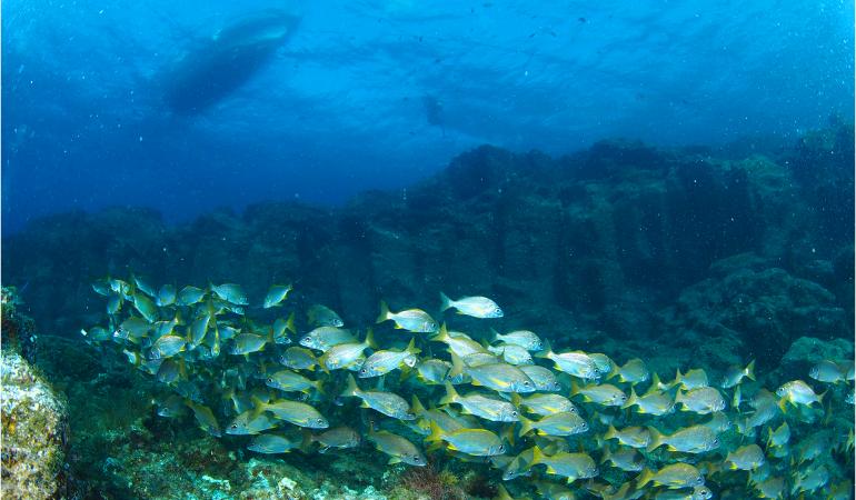 Underwater experience Tenerife