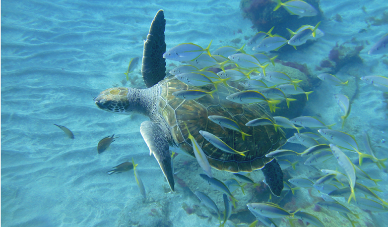 Snorkel and get to see turtles