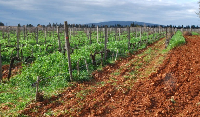 Wine & food Majorca