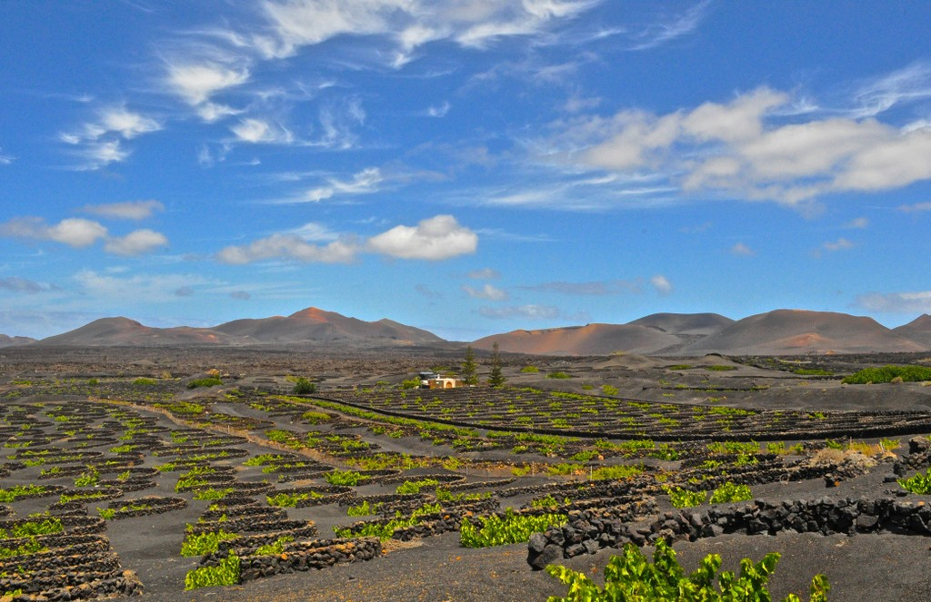 Wine region Lanzarote