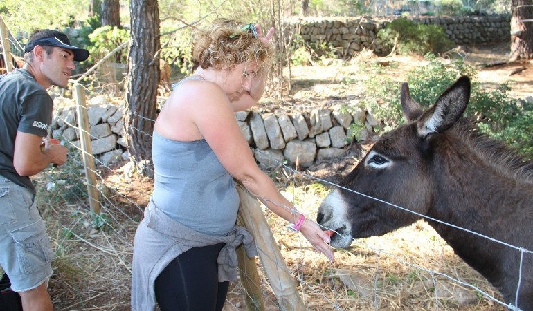 Donkeys are typical in Mallorca
