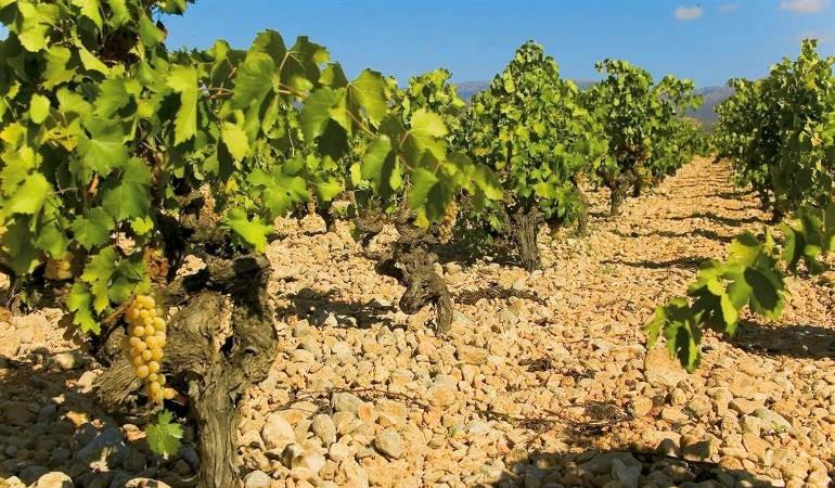 Majorca wine tour