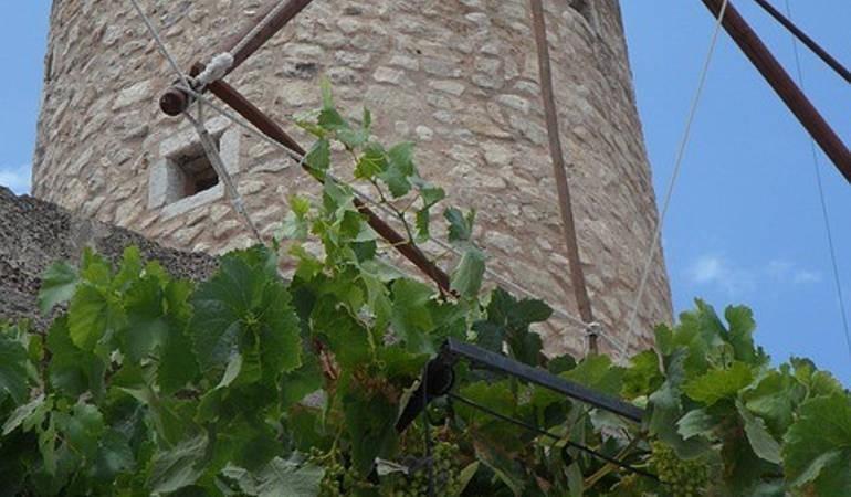 Majorca wine route