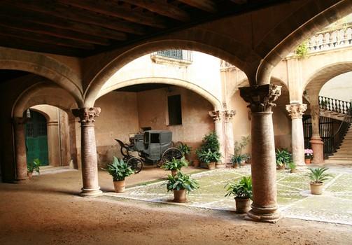 Ruta guiada Palma - Plaza de Cort y olivo milenario